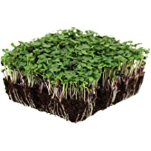 Ubuy Malaysia Online Shopping For micro greens in Affordable Prices